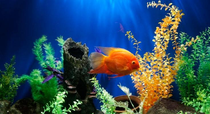 Aquarium Black Friday Sales 2019