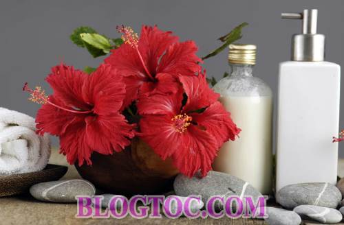Uses and uses hibiscus flowers in hair beauty 2