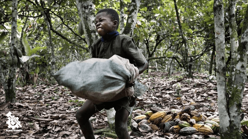 Love Chocolate? Wait Till You Hear About Cocoa's Slavery Production