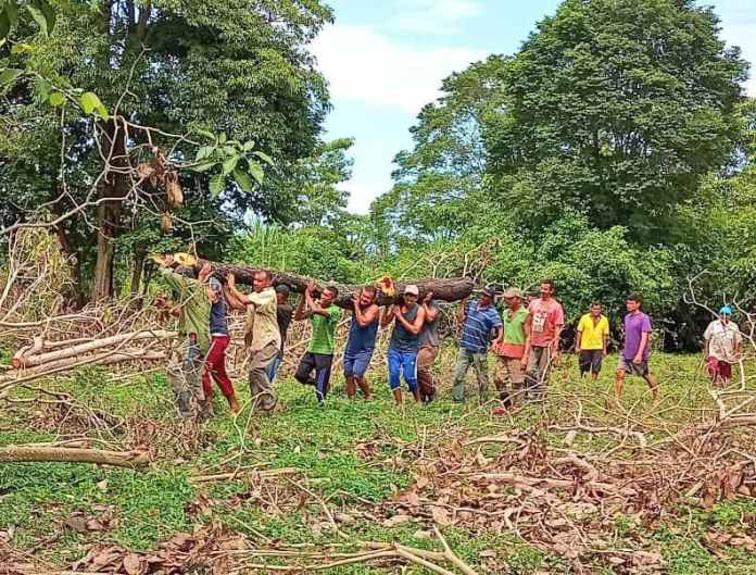 Indigenous farmers hard at work