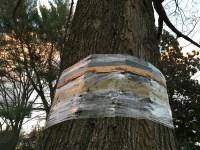 Tree Banding Time in Charlotte NC  Blackhawk Hardware