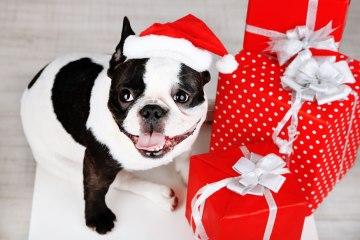 Pug Presents