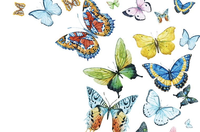 Butterflies Illustrations