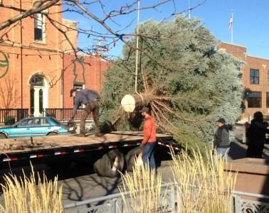 Downtown Christmas Tree