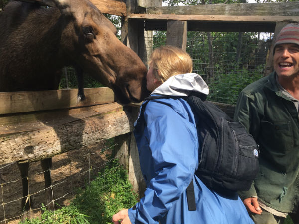 Moose kiss small