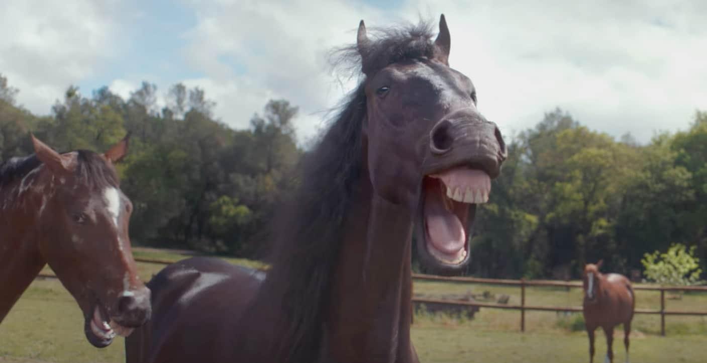 Vw Werbung Mit Lachenden Pferden • Blacklime