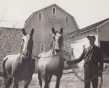 story_bw_horses