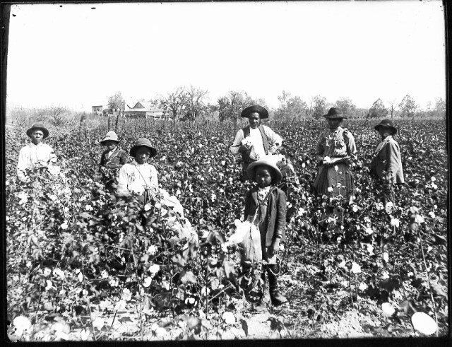Black Cotton Farmers