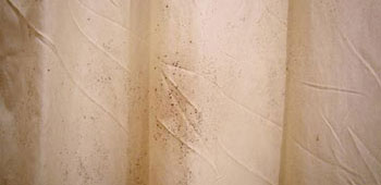 how to remove black mold in shower curtains