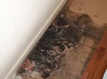 black mold on floors 7 best tips to