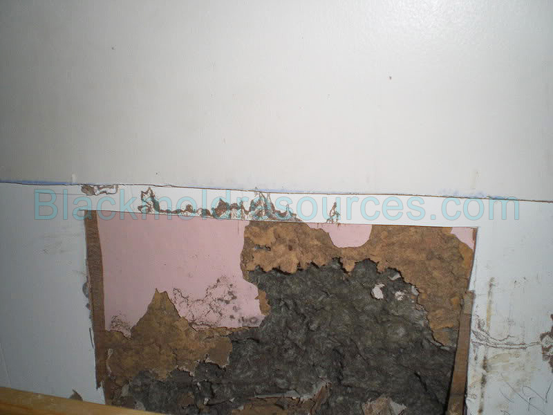 Pictures Of Black Mold Indoor Mold Resources