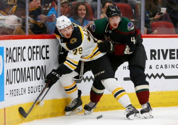 Bruins Coyotes Hockey