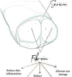 sericin and fibroin are the two key proteins found in silk strands [ 1520 x 2170 Pixel ]