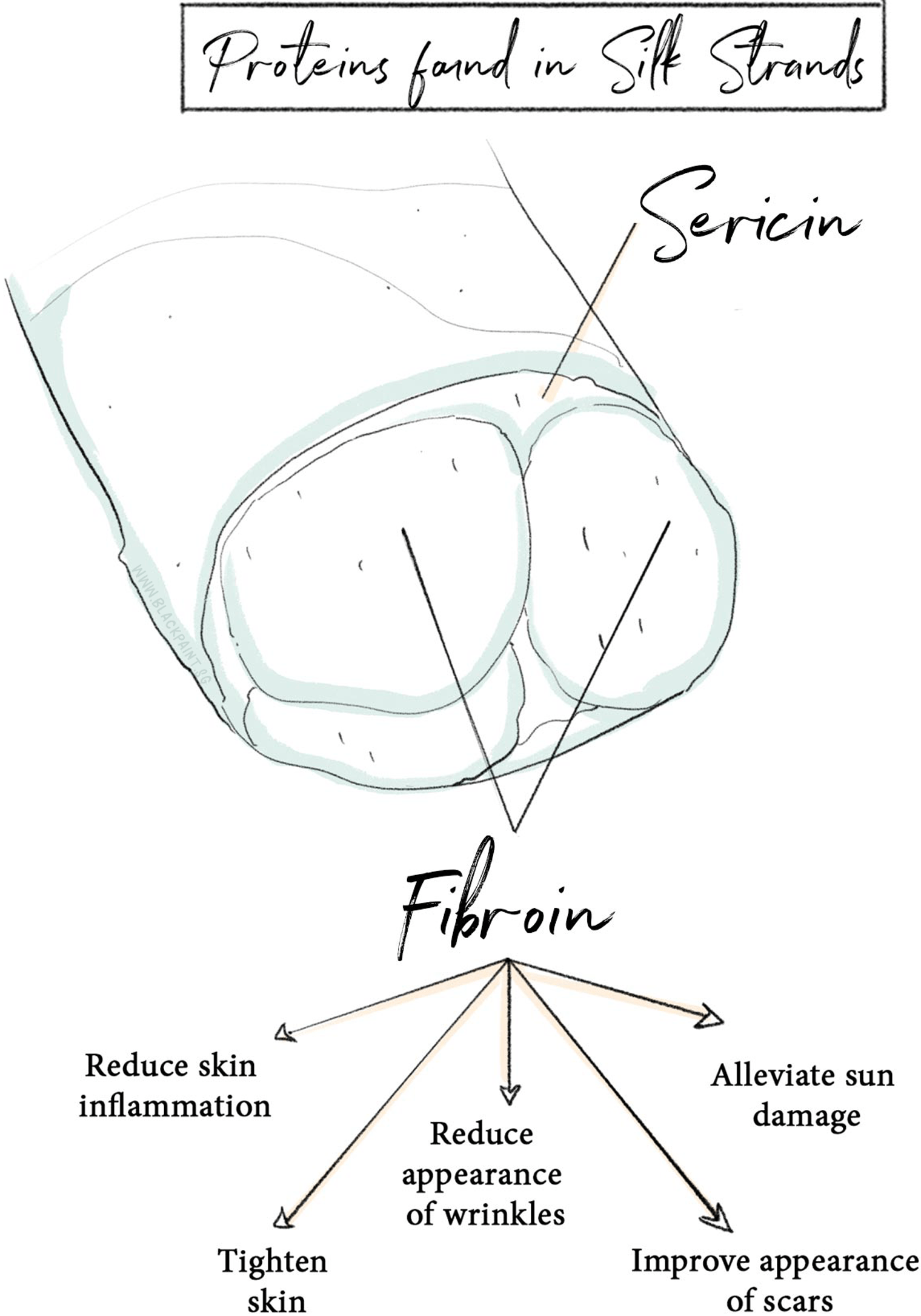 hight resolution of sericin and fibroin are the two key proteins found in silk strands