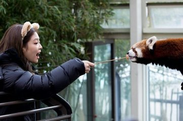 Blackpink Jennie Everland Zoo