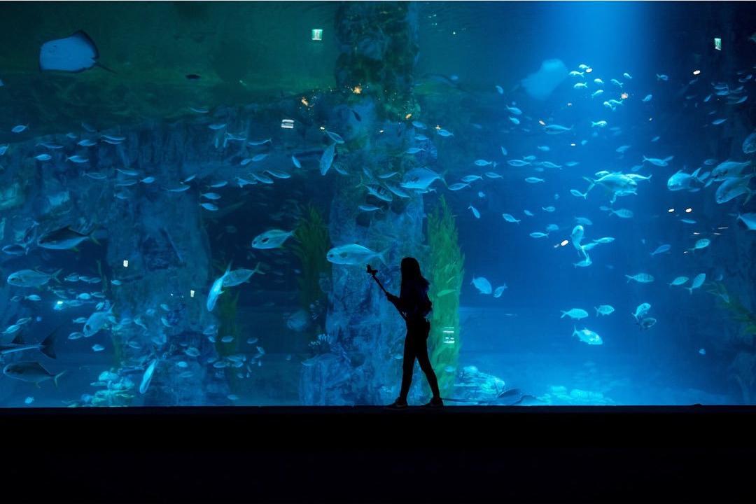 Blackpink Rose Big Aquarium
