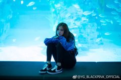 Blackpink Rose aquarium 2018