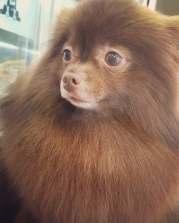 Kuma Blackpink Jennie Puppy 2