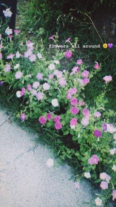 BLACKPINK Rose Instagram Story 30 July 2018 roses are rosie