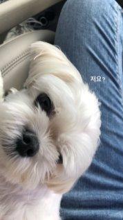 BLACKPINK UPDATE Jisoo Instagram Story 26 July 2018 with Dalgom 2