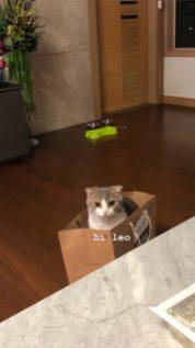 BLACKPINK Lisa cat Leo, Jennie Instagram Story