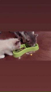 blackpink-lisa-cats-leo-and-luca-3-september-2018_dvd.original
