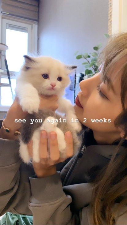 BLACKPINK Lisa Cat Lily