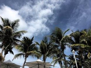 palm_tree_photography_background_pinterest