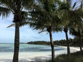 palm_trees_beach_photography