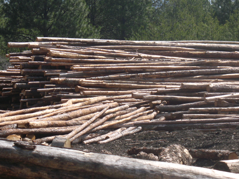 Hemlock Firewood