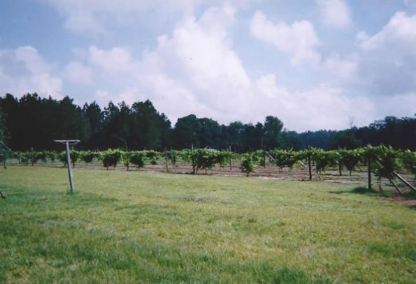 Black_Owned_Vineyards_Bowman-595x407 Black Owned Wineries in the South You Must Visit