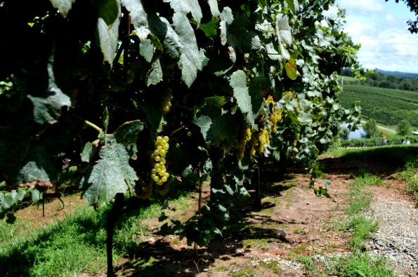 Frogtown-Cellars-595x395 Wineries in Dahlonega, GA That You Must Try