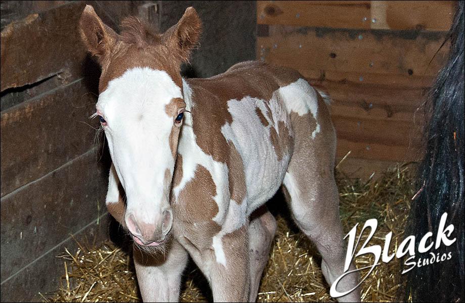 04-10 Foal 03