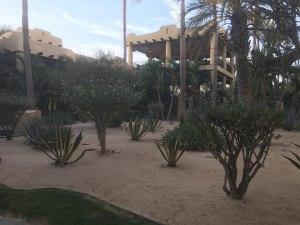 Los Cabos desert shrubs