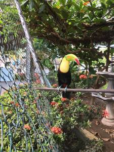 A Beautiful Toucan Bird in Panama!