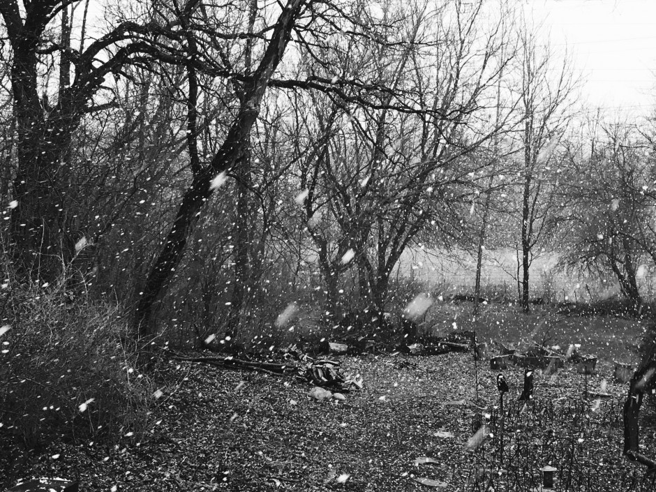 Snow Fall in Black & White