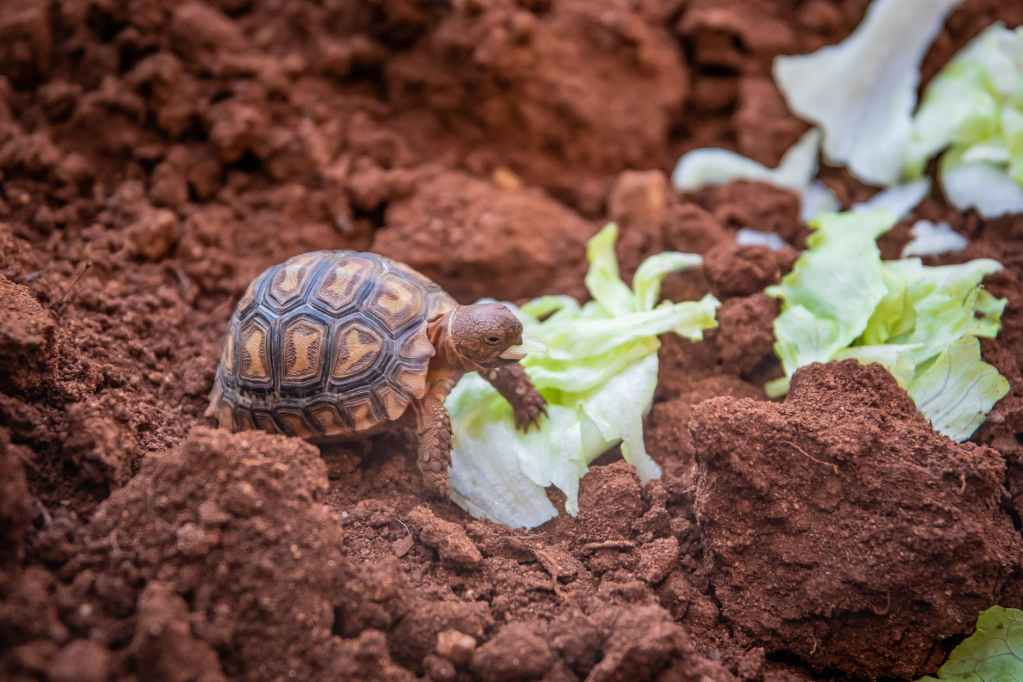 photo of small turtle on soil