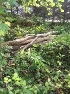 Log piles, a valuable hibernation spot for small mammals and reptiles