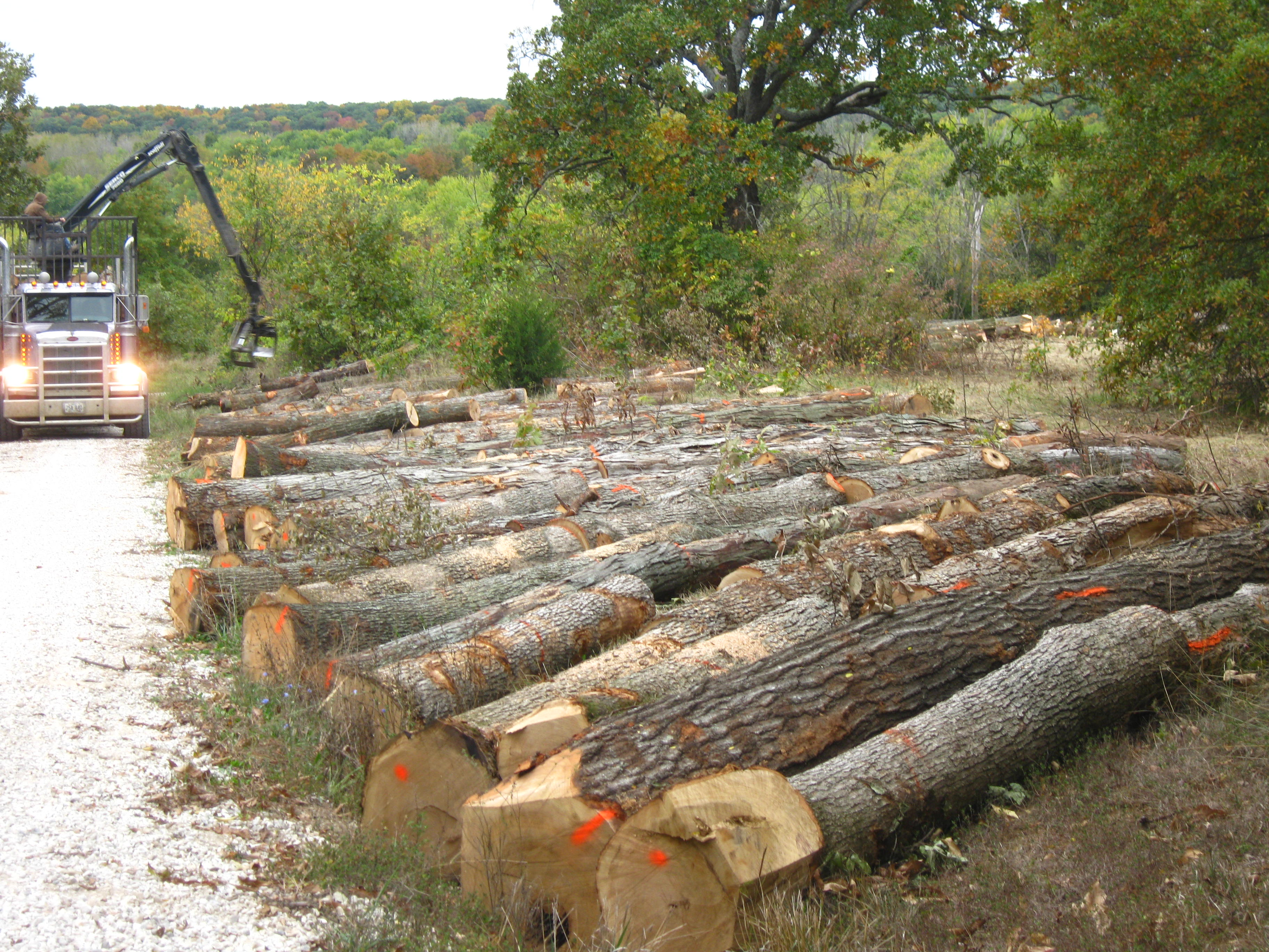 Blackwell Creek Forestry Timber Sales