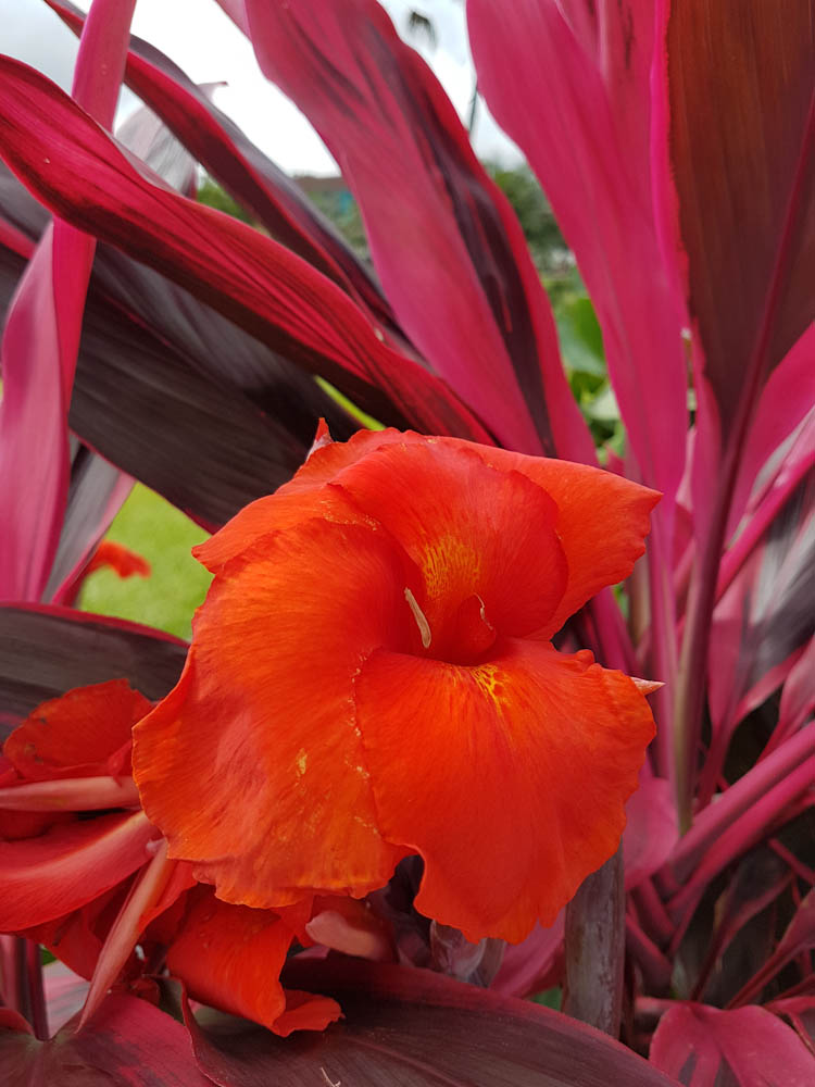Blumenpracht in La Fortuna