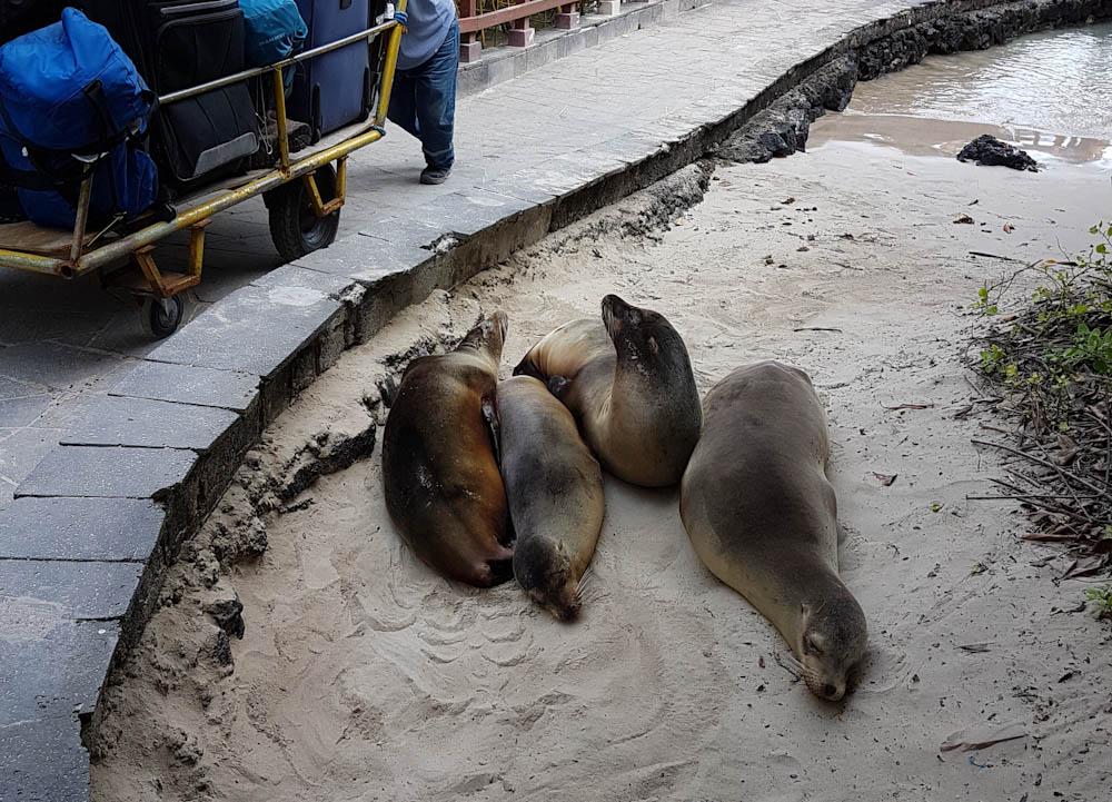 Galapagos hält was es verspricht: einzigartige Flora und Fauna sowohl über als auch unter Wasser und erst die Tiere, die einem überall vor die Füsse laufen. Fantastisch!