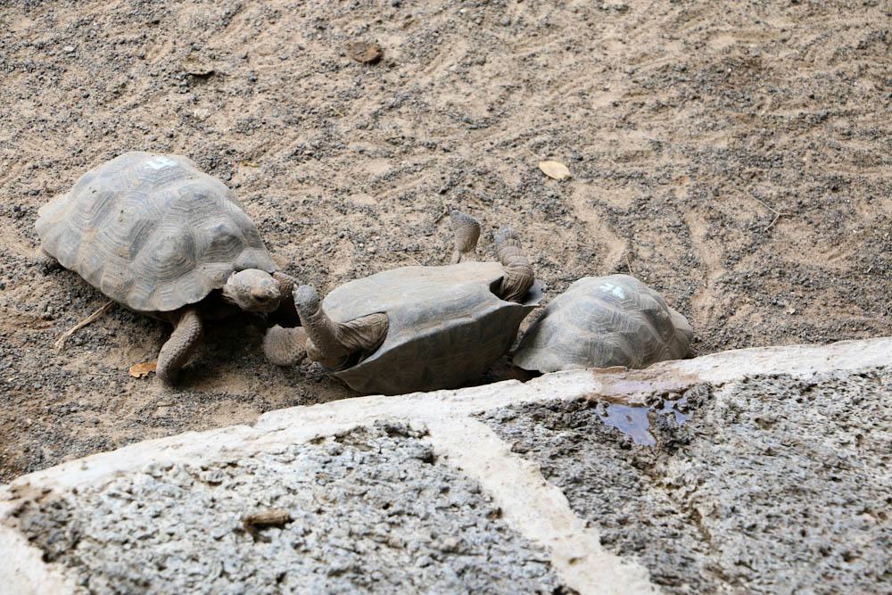 Die anderen Schildkröten halfen der Kleinen sich wieder aufzurichten.