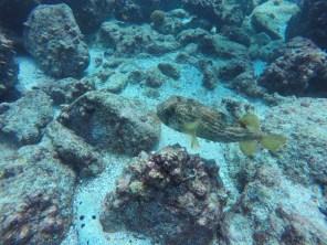 Ein Fisch :-)