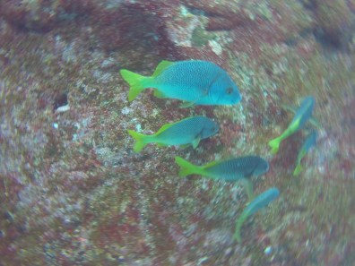 Kunterbunte Fische