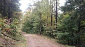 pilzspaziergang-otterberg-okt-2016-35
