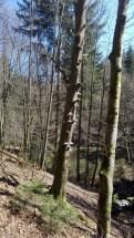 Ruinen Langenthaler Hof - Wald