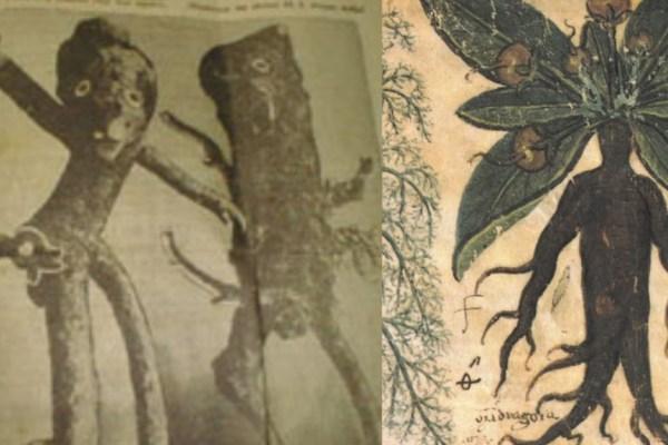 Duboko u korijenju mistične mandragore tražili su sablasna čovjekolika bića koja nose sreću i znače dobru kob