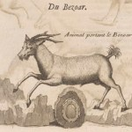 Bezoar je bio protuotrov koji su vračevi, čarobnjaci i iscjelitelji ljubomorno čuvali, stigao je s istoka i kažu, imao čudotvorna svojstva