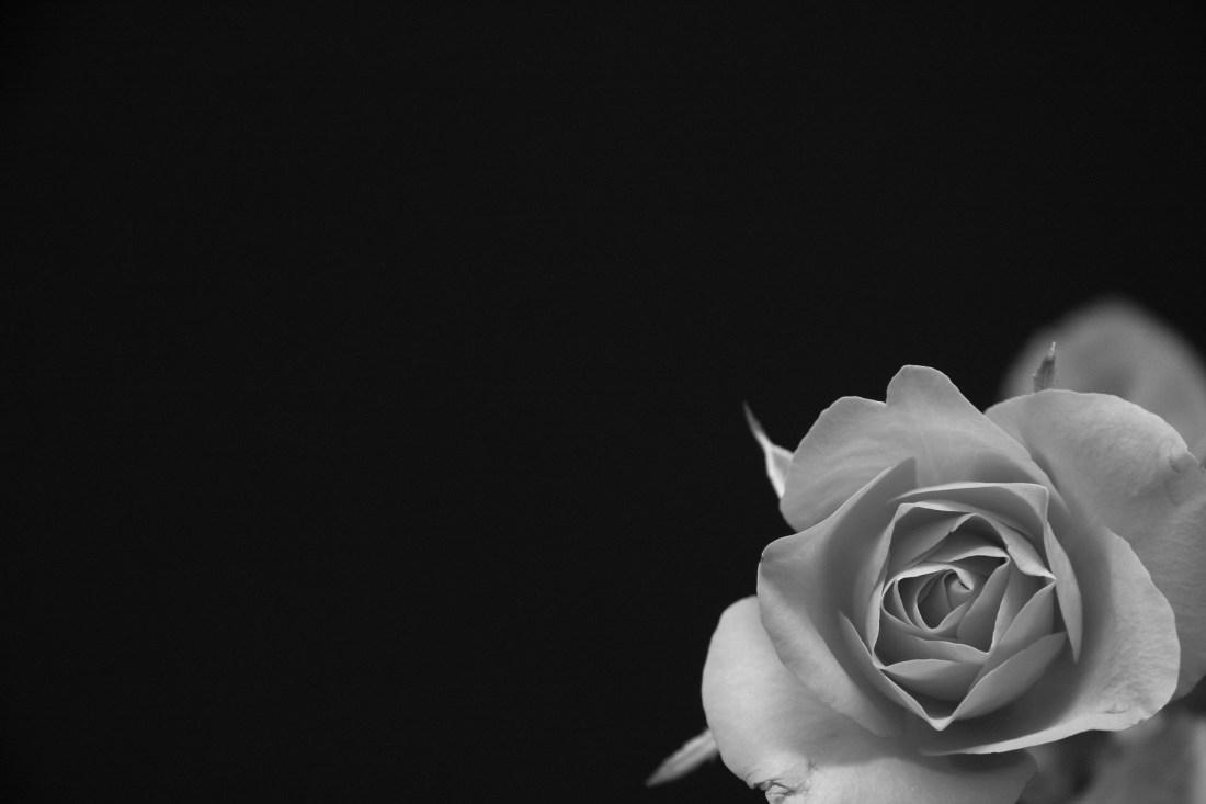 Geburt // Roses Revolution Day – Gegen Gewalt unter der Geburt