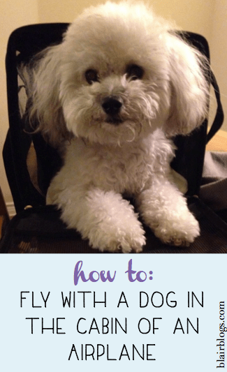 How To: Fly With a Dog in the Cabin of an Airplane   Blair Blogs